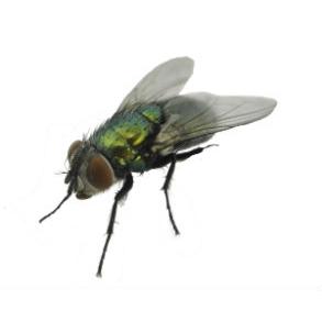 Spyfluer
